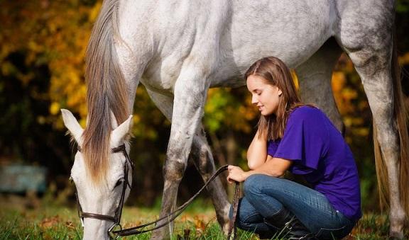 Diet Pet Horse