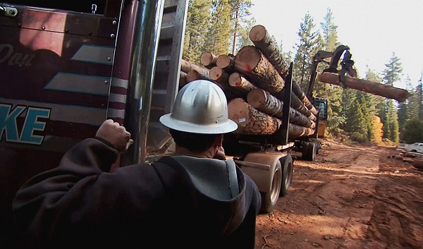 Forest Trucks    Inspections