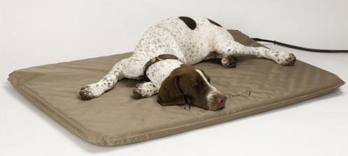 Comfort in Dog