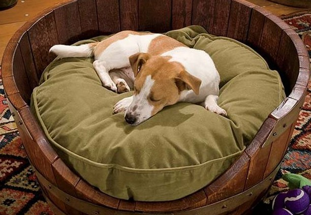 Dog beds provide your pet